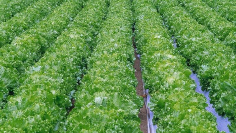 Drip Irrigation 690x450